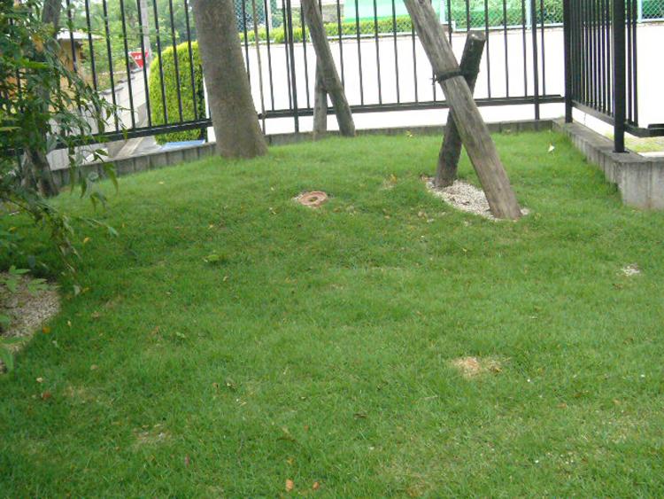 庭園設計・施工・管理|K邸土壌改良(滋賀県大津市)