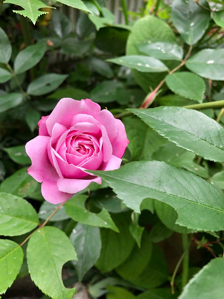 春~梅雨時のモデルガーデンの植物(滋賀県大津市)